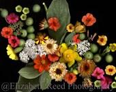 color photography Thanksgiving cornucopia photograph 8 x 10 print