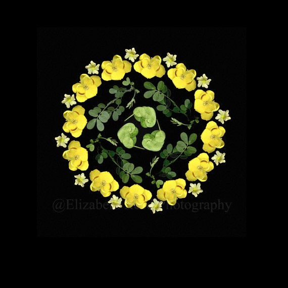 Photography still life Florida Native Plants  nature photograph gift for gardener black background