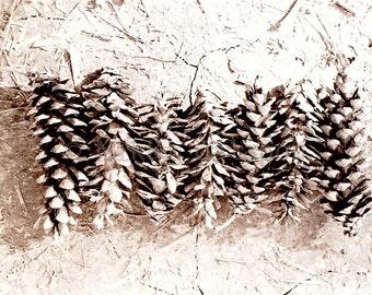 Seven Pine Cones, Black and White Fine Art Photograph