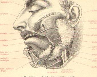 1904 Anatomy of Oral Cavity and Nasal Cavity Original Antique Engraving