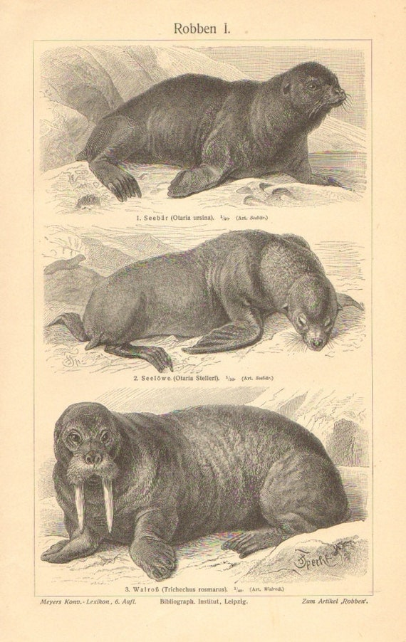 the pinnipeds Download eBook PDF/EPUB