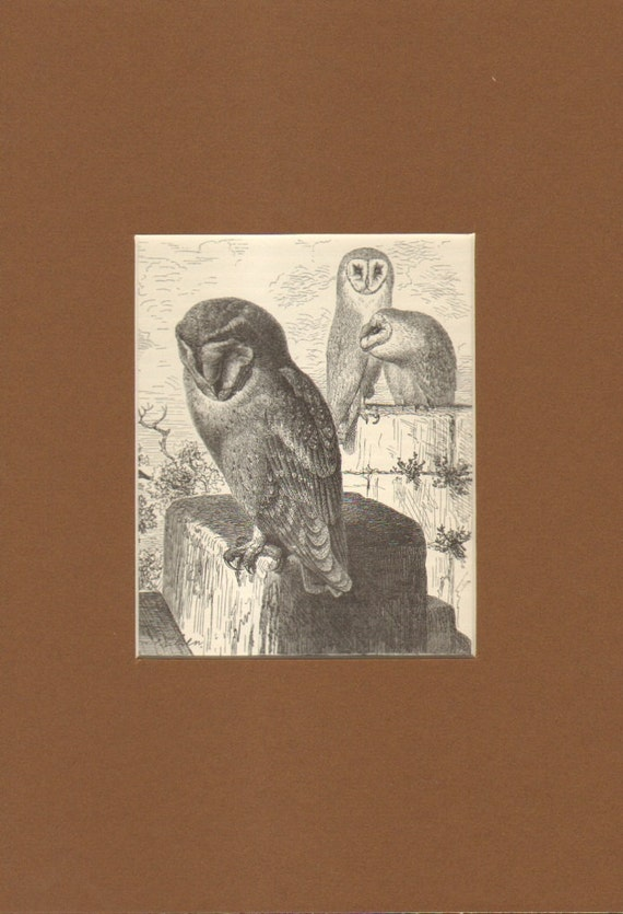 1892 Antique Matted Engraving of the Barn Owl