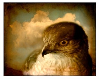 nature photography, still life, Bird, raptor, falcon, stormy, clouds, sepia, brown, wall art, rustic, cabin, shabby chic, bird lover, 8x10