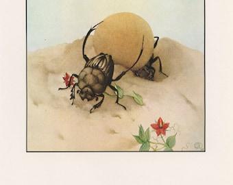 Bug Art, Insect Art, Fantastic Creatures, Sisyphus Beetle, Edward Julius Detmold, USA, Antique Children Print