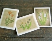 wildflower watercolor cards  set of six woodland dandelion poppy snowdrop tender shoots