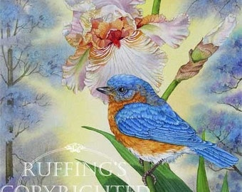 Bluebird and Pink Iris Giclee Fine Art Floral Print, Yellow, Green, The Prettiest Blue, Signed A E Ruffing, on 8.5 x 11 inch art paper