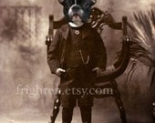 French Bulldog Art, Animals in Clothes, 5x7 Print, 8x10 Print, Anthropomorphic Dog in Suit, Victorian Dog Portrait
