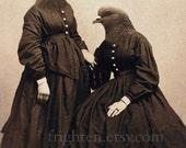Pigeon Art, Pigeon Sisters Print, Anthropomorphic, 8x10 Bird Art, Oddity Art, Twin Sister Art, Mixed Media
