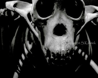 Monkey Skull Photograph Black and White Surreal Primate Skull Bones Wall Art 8x8 Animal Photography