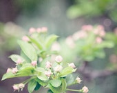Spring Decor, Woodland Decor, Green Pink Grey, Dreamy Soft Pastel Flower Photography, Blossoms, Flowering Cherry.