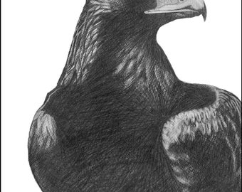 Golden Eagle - 11 x 14 Matted Print