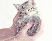 Kitten Photography, Nursery Wall Art, Baby Animal Art, Baby Animals in Snow, White Grey Pink Decor, Kittens, Cat Picture 8x10 or 11x14 Print