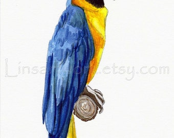 Original Watercolor painting or Limitied Edition Print of a Hyacinth Macaw, Parrot. tropical birds