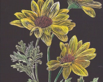 Yellow Flowers Scratchboard and Watercolor