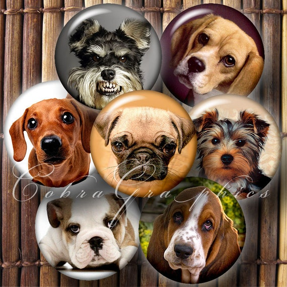 Cute Dogs - Printable Images - 1.313 inch Circles for 1 inch Buttons, Magnets - Digital Downloads - Collage Sheet CG-510
