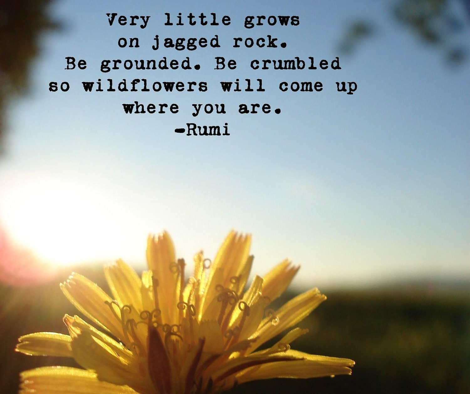 Dandelion Photograph With Rumi Quote By Fiercegreen On Etsy