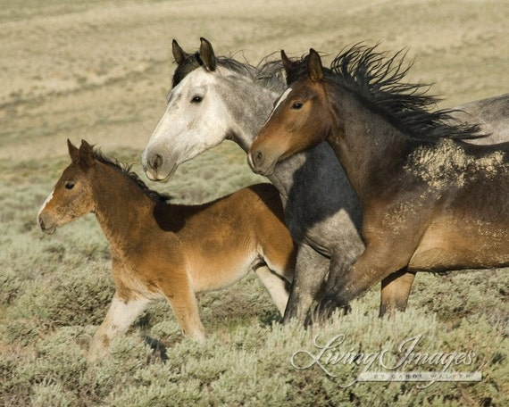 Items similar to Three Run - Fine Art Wild Horse ...