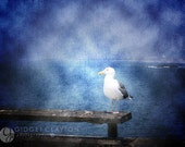 Fine Art Photography 8 x 10 Print • Birds • Profile of a Seagull • Home Decor • Blue Ocean Sea • fPOE • Wall Art • Gifts Under 50