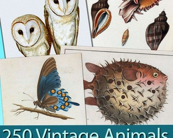 """Digital collection """"Australian Birds and Miscellany Vintage"""" birds fish butterflys labels decoupage ephemera old book greeting card / C145"""