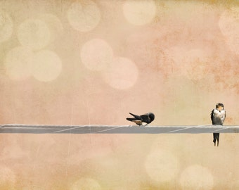 Animal photography, 2 birds on a wire, swallows, peach, pink photograph