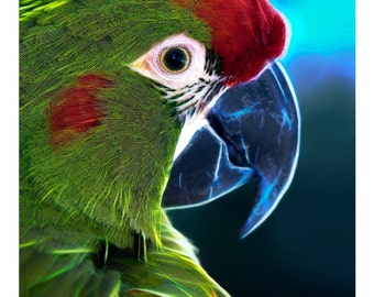 Wildlife Series Three: Electric Macaw
