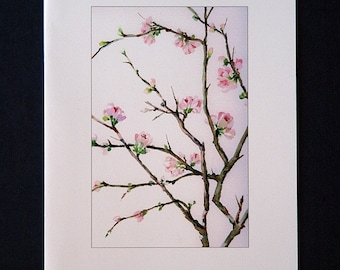 Set of 5 blank cards - Flowering Quince