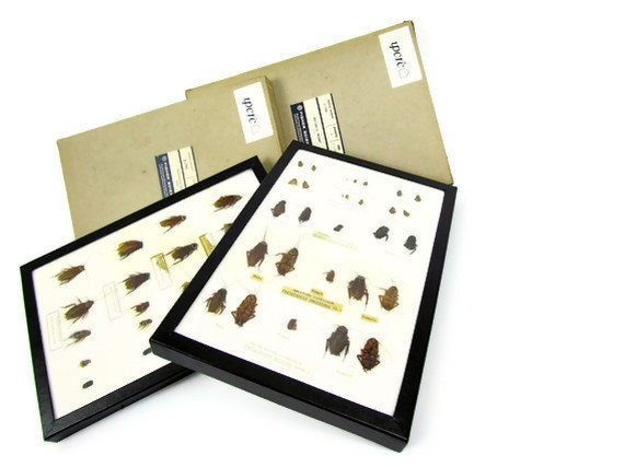 Reserved for Rebecca Howell Cockroach collection in two scientific riker mount boxes with original typed identification labels