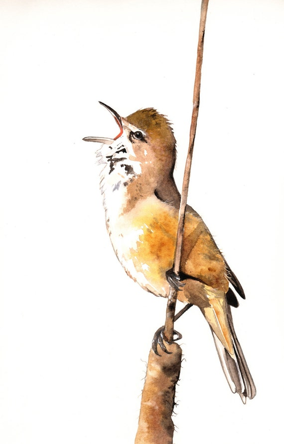 Bird Watercolor Painting -B057-  print of watercolor painting A4