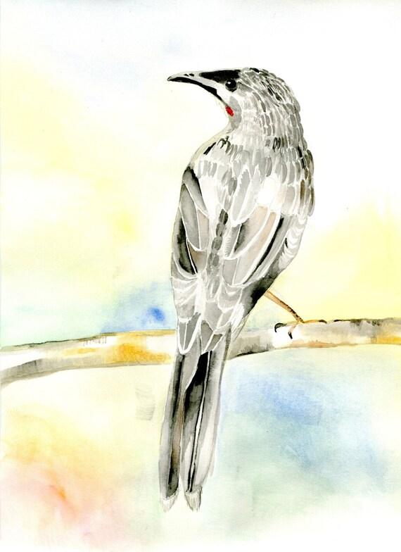 bird, Australian Wattle Bird, Animal painting, watercolor, Illustration print ,Giclee print