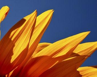 Sunflower, Full-frame photo on 8x10