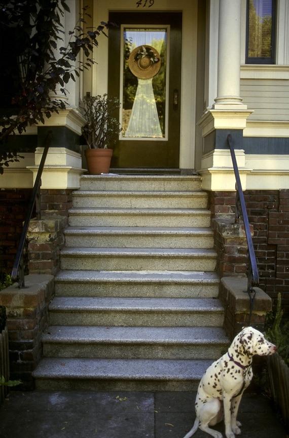 Dalmatian at the steps