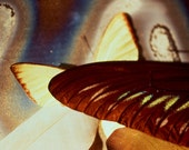 A Butterfly Intervention, Butterfly Wings, Feather, Metallic, Fine Art Photography, 5x7