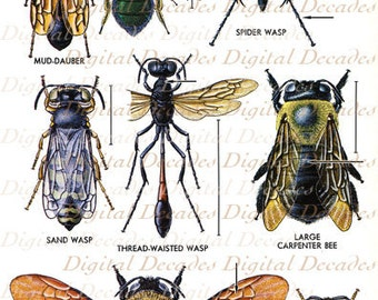Bees and Other Flying Insects Vintage Art Illustration - Bumble Bee Bugs Science Specimen Mount - Digital Image