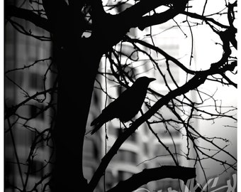Bird in the City Silhouette Black and White Square Photo Art Print - 8x8