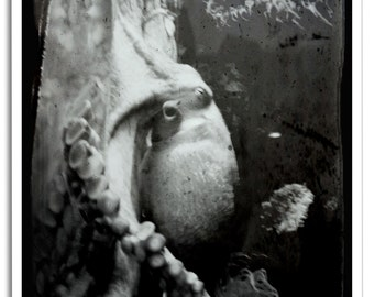Octopus and Tentacles Black and White Photo Art Print Poster - 12x18
