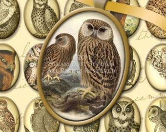 Simply Victorian Owls - 30 x 40mm Cameo-Size Oval - Antique, Steampunk, Goth - Digital Collage Sheet - Instant Download and Print
