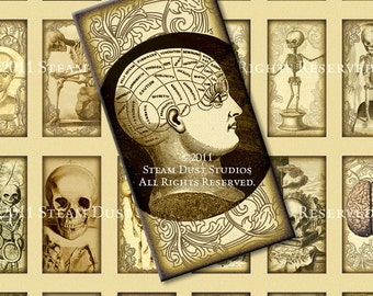 Antique Anatomy - Victorian Goth Steampunk - 1x2 inch Domino Images - Skulls, Skeletons, etc. - Digital Collage Sheet - Instant Download