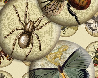 Victorian Entomology - 1-1/2 Inch Circles - Scrolls, Antique Script and Antique Maps - Digital Collage Sheet - Instant Download and Print