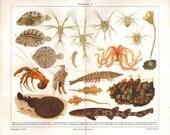 Marine Life Vintage Print  Fishes Crustaceans Crinoids 1920s Ontogenesis