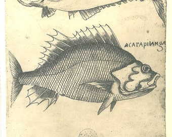 Drawing of Fishes of Maranhao Brazil Natural History Vintage Print