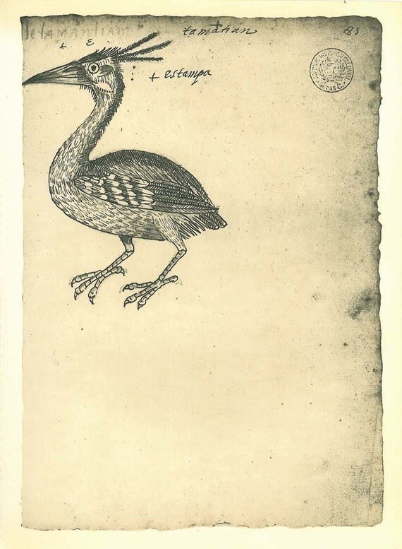 RESERVED for Lizzie Birds Maranhao Vintage Sketch Drawing, Art Print, Brazil Yellow Crowned Night Heron