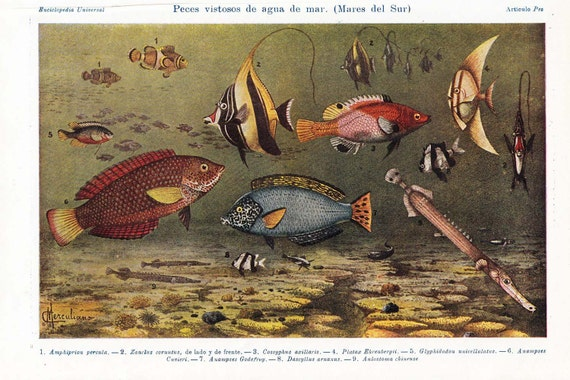 Vintage Print of Tropical Fishes Lithograph South Pacific Sea Oceania