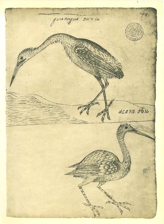 Vintage Birds Print Snowy Egret  Little Blue Heron Sketch Drawing  Maranhao  Brazil