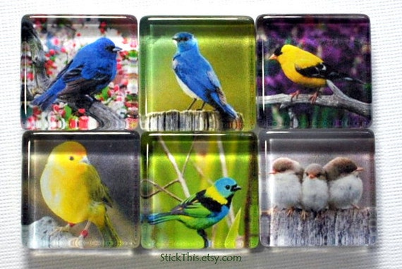Bird Magnets, Set of Six, Square Glass Magnets, Kitchen Magnets