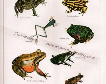 FROGS FROGS TOADS Vintage Book Color Plate 3 pages Amphibian prints Bullfrog Tree Frog Vintage Christian prints