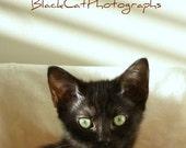 Child's room art, Cat Print, black kitten picture, 5x7 wall art, pet photography, curious cat photograph, cute wall art, sweet, adorable