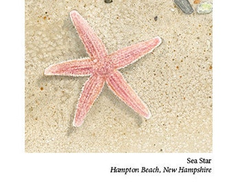 Sea Star Card, Hampton Beach, N.H.