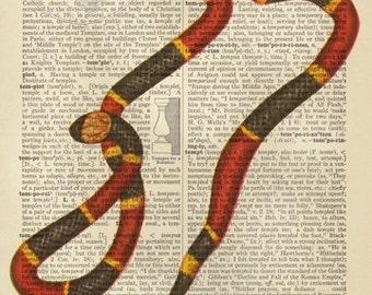 Temptation.  Snake Dictionary Art Giclee Poster Print