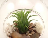Air plant terrarium Kit // Hanging Tillandsia Terrarium Kit  // Glass Ball Terrarium