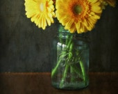 Spring, teal blue, mason jar of yellow daisies, flowers, nature, home decor, original fine art photograph, 8x10 print, metallic finish